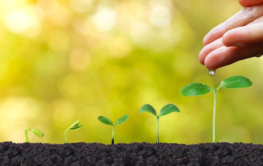 Vårnytt – Silicea for sterke og friske planter
